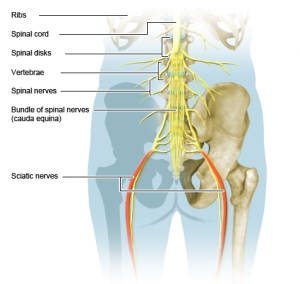 Sciatic Nerve Pain, Numbness, & Tingling Treatment - Sciatica Pain in Buttocks Relief